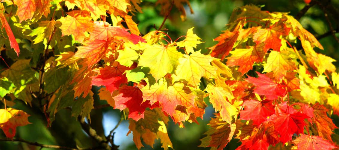 L'autunno… non porta via tutte le offerte!