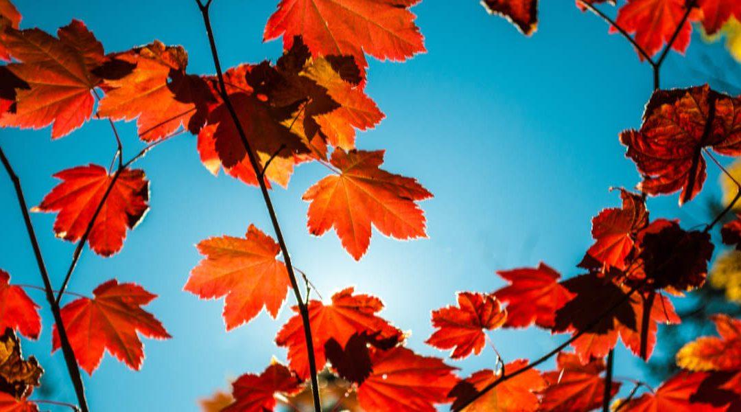 Con l'autunno è arrivato anche il nuovo volantino LogiSS